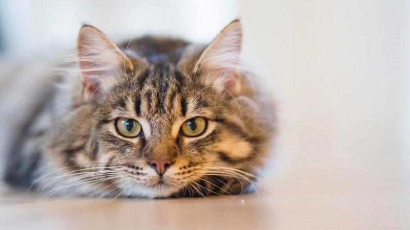 Kupmy sobie kota, czyli co warto wiedzieć o adopcji lub zakupie kota?